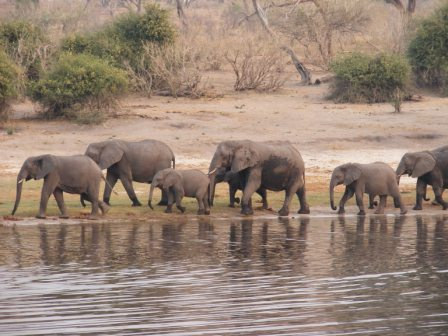 Lake Kariba Animals